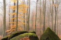 Oldřichovské bučiny na konci podzimu
